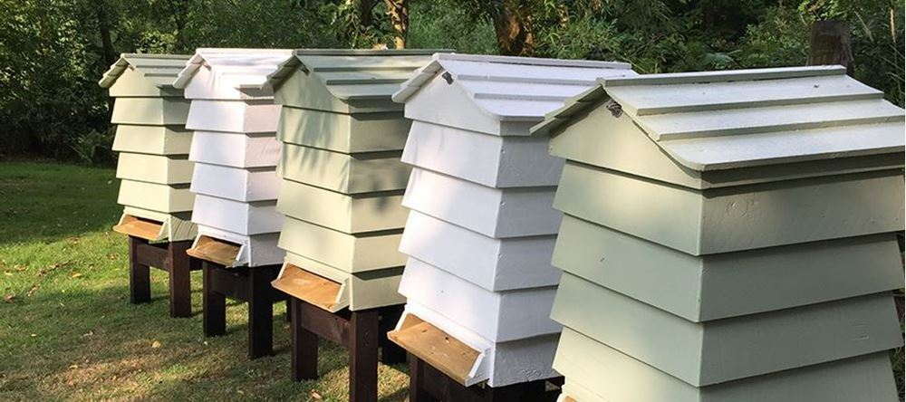 Bees In Our Community